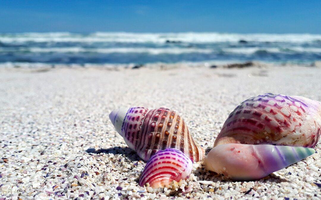 Protegido: España se adhiere al Pacto Europeo de los Plásticos
